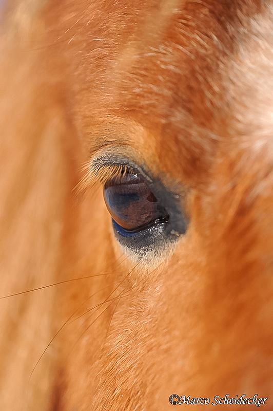 C2012-02-05-0864 - Ponydame Iren