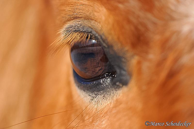 C2012-02-05-0876 - Ponydame Iren