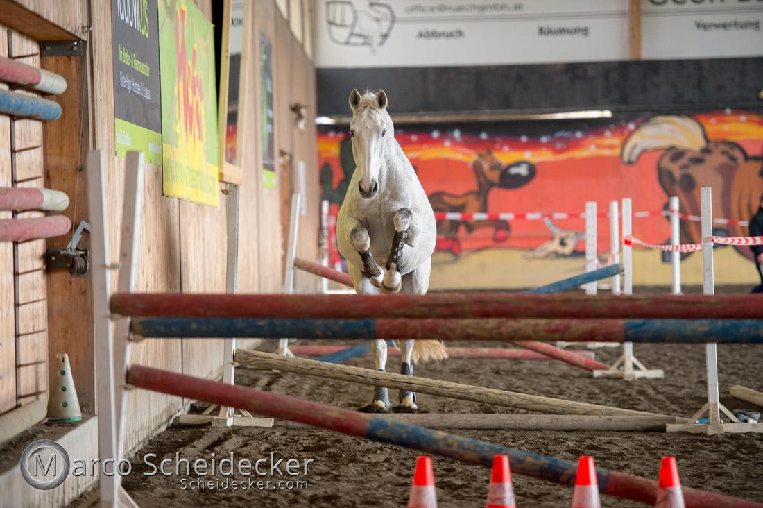 C2018-03-10-6026 - Freispringen - Lala