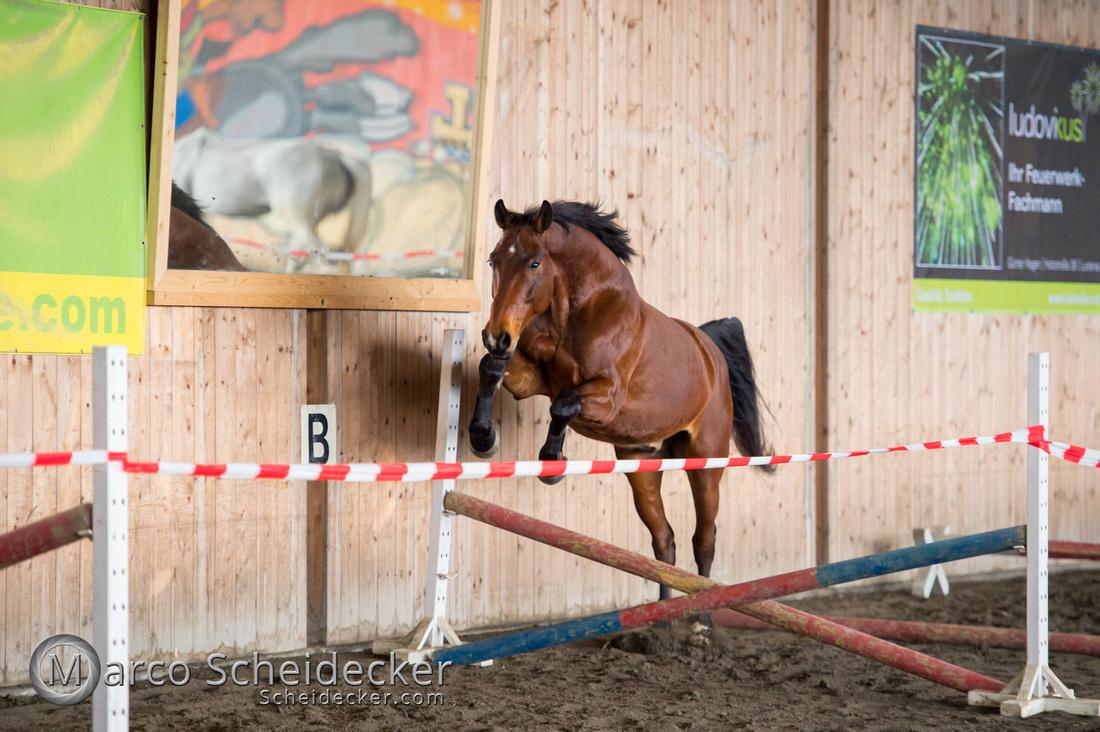 C2018-03-10-7015 - Freispringen - Cassaro