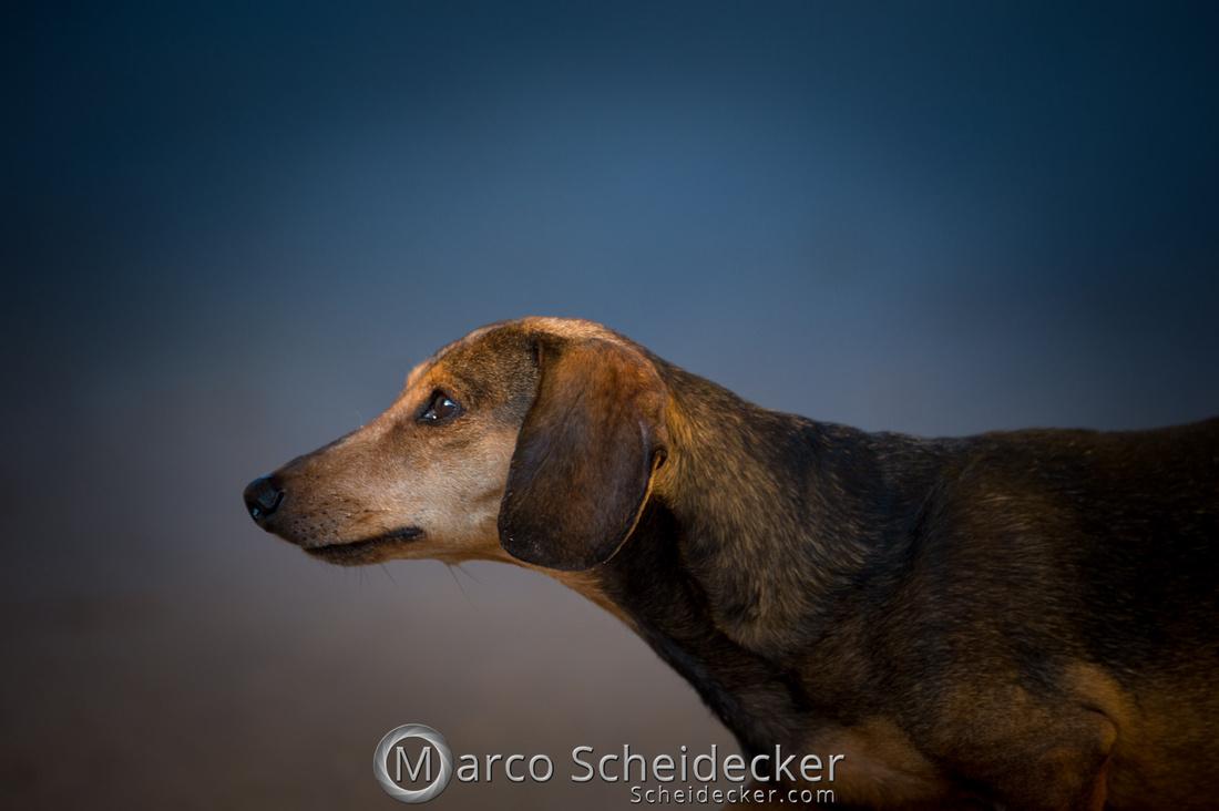 C2018-03-24-3008 - Herr Anders