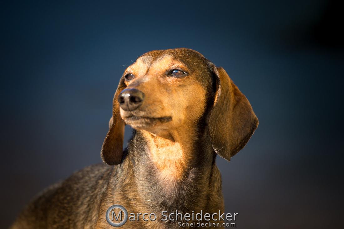 C2018-03-24-3046 - Herr Anders
