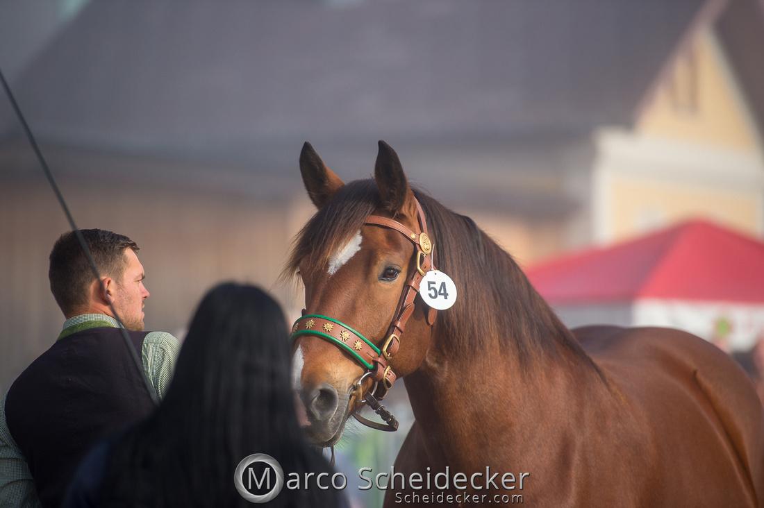 C2018-10-26-0062  -  Noriker Landesschau 2018