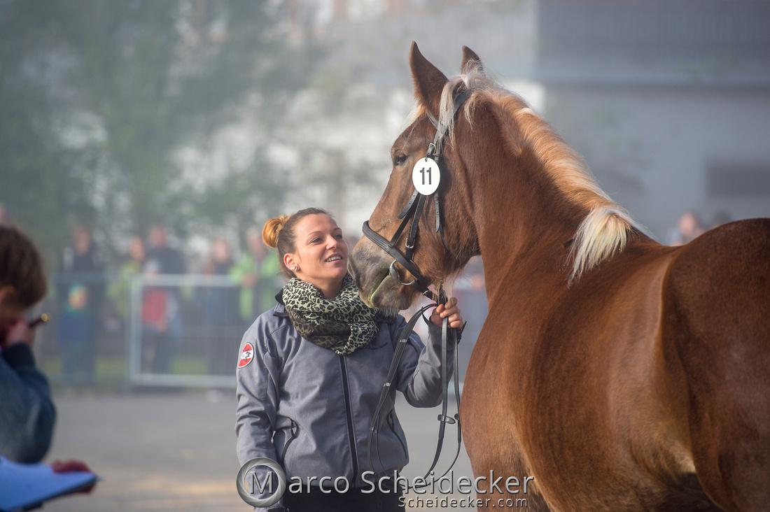 C2018-10-26-0091  -  Noriker Landesschau 2018