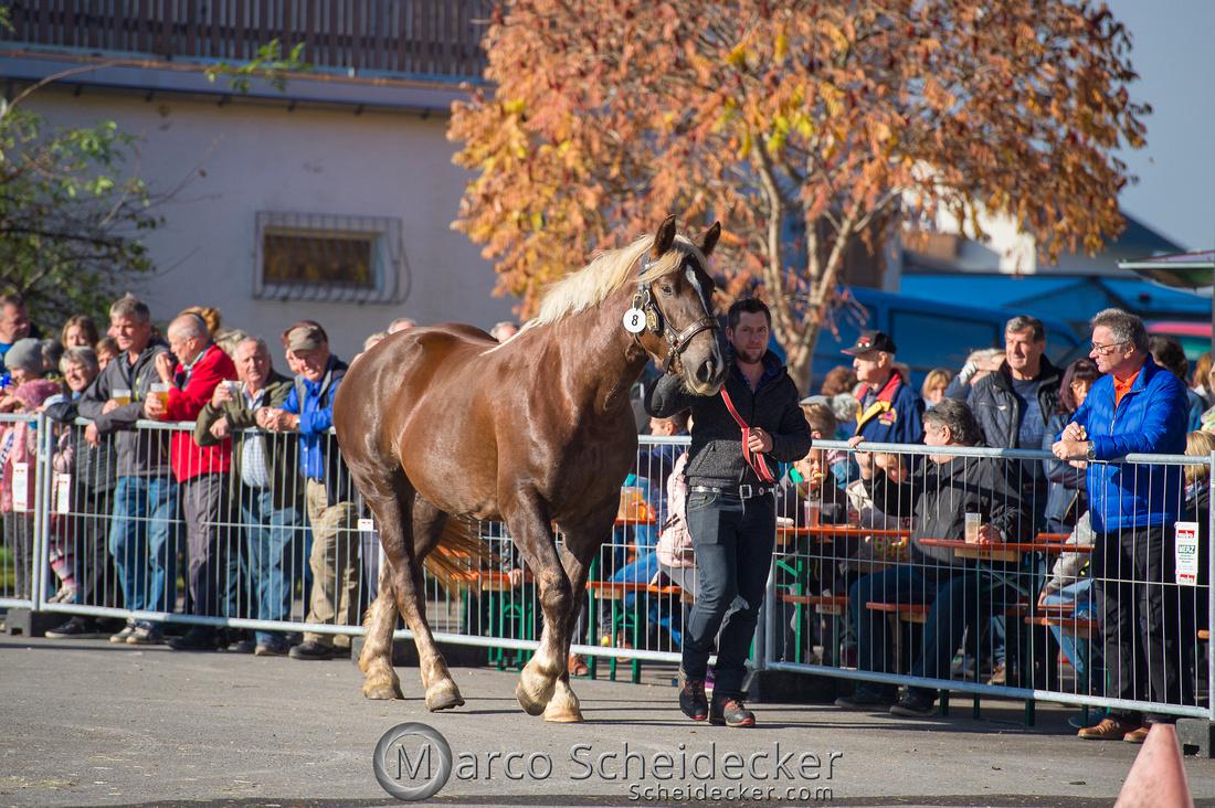 C2018-10-26-0133  -  Noriker Landesschau 2018