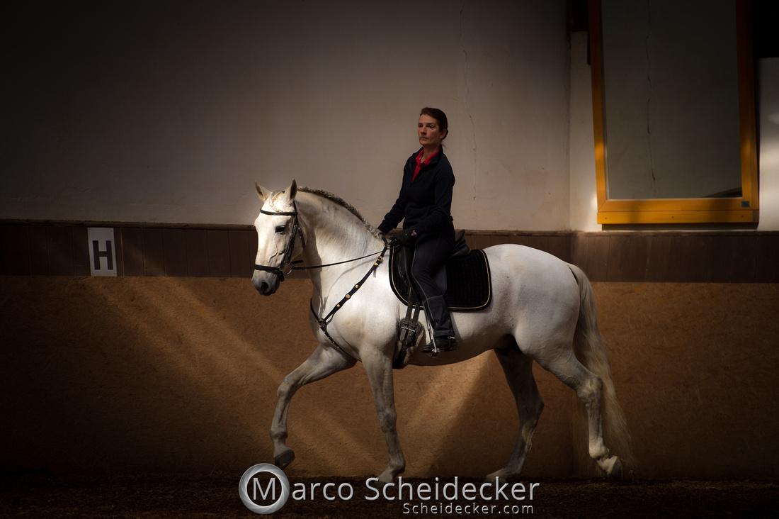 C2018-04-29-0106  -  Ruth Giffels Morgenarbeit 2018 - Thema - Sprache des Pferdes