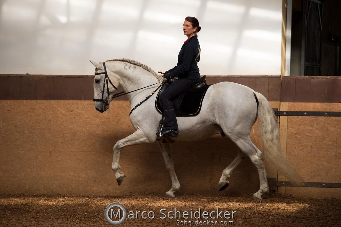 C2018-04-29-0108  -  Ruth Giffels Morgenarbeit 2018 - Thema - Sprache des Pferdes