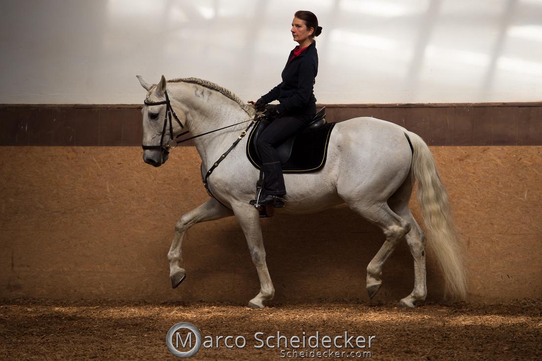 C2018-04-29-0110  -  Ruth Giffels Morgenarbeit 2018 - Thema - Sprache des Pferdes