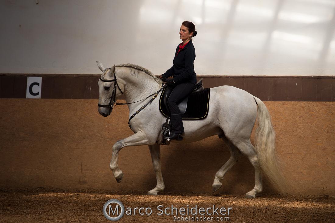 C2018-04-29-0111  -  Ruth Giffels Morgenarbeit 2018 - Thema - Sprache des Pferdes
