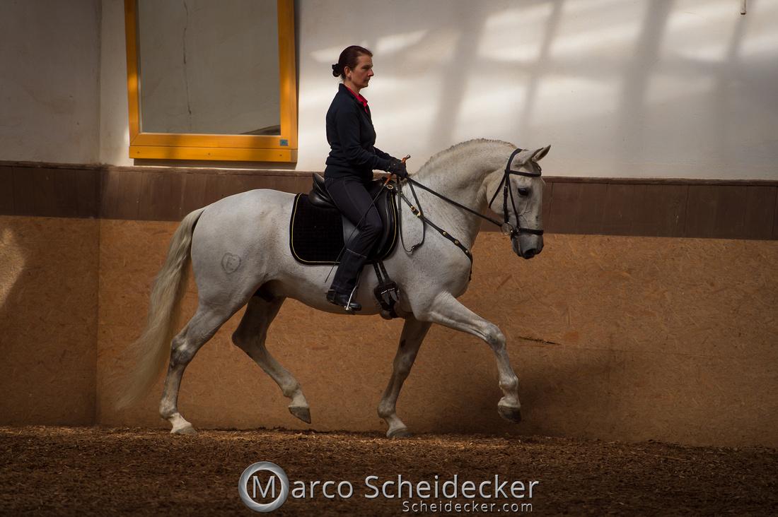 C2018-04-29-0116  -  Ruth Giffels Morgenarbeit 2018 - Thema - Sprache des Pferdes
