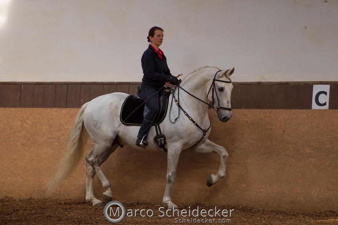 C2018-04-29-0123  -  Ruth Giffels Morgenarbeit 2018 - Thema - Sprache des Pferdes