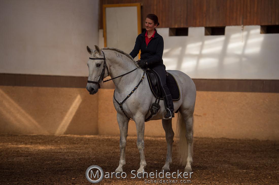 C2018-04-29-0187  -  Ruth Giffels Morgenarbeit 2018 - Thema - Sprache des Pferdes