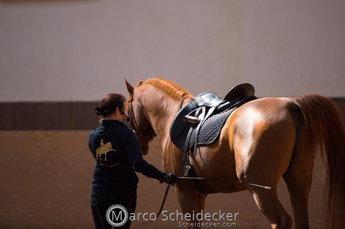 C2018-04-29-0336  -  Ruth Giffels Morgenarbeit 2018 - Thema - Sprache des Pferdes