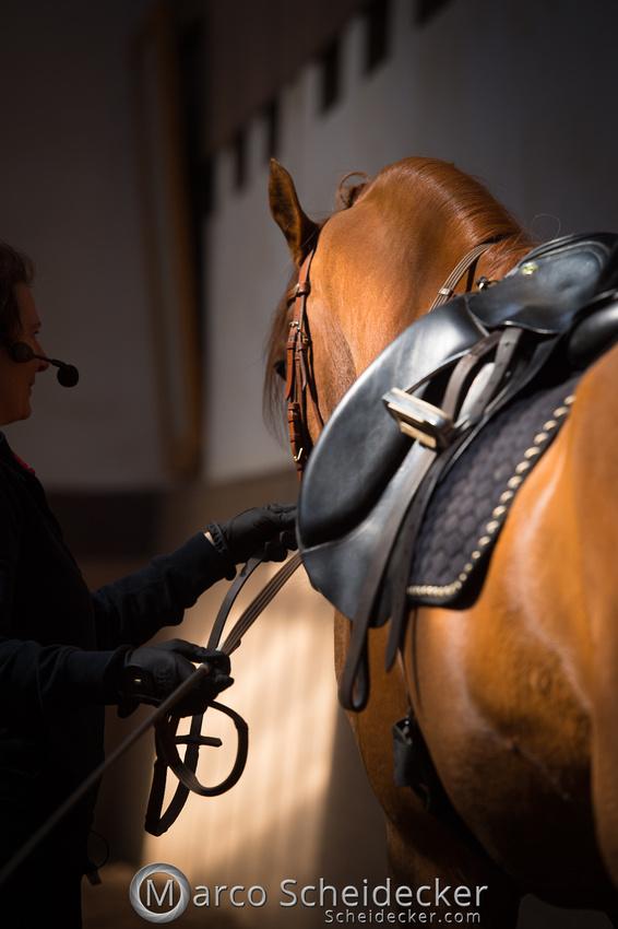 C2018-04-29-0356  -  Ruth Giffels Morgenarbeit 2018 - Thema - Sprache des Pferdes