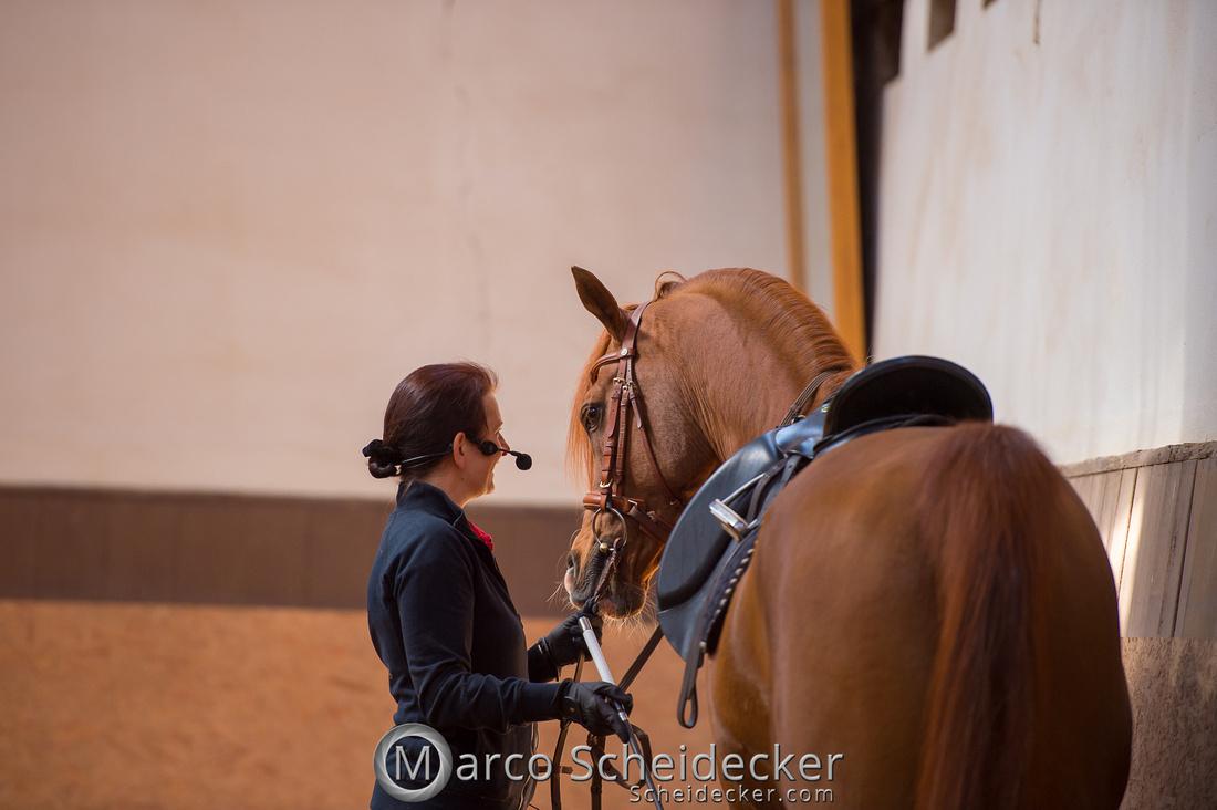 C2018-04-29-0359  -  Ruth Giffels Morgenarbeit 2018 - Thema - Sprache des Pferdes