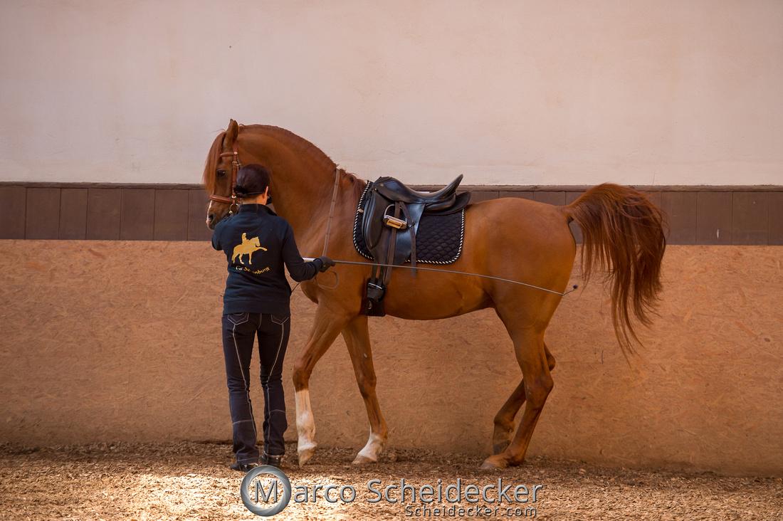 C2018-04-29-0362  -  Ruth Giffels Morgenarbeit 2018 - Thema - Sprache des Pferdes