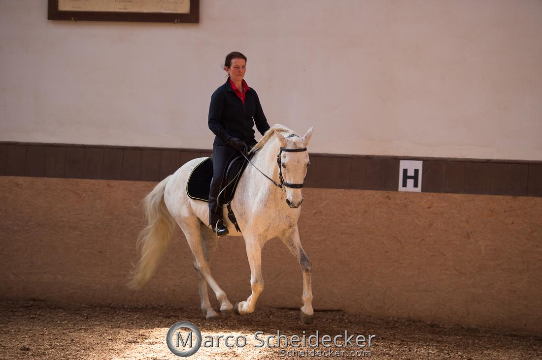 """C2018-04-29-0467  -  Ruth Giffels Morgenarbeit 2018 - Thema """"Sprache des Pferdes"""""""