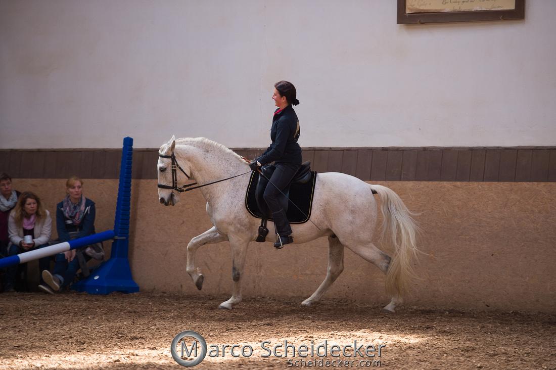 """C2018-04-29-0520  -  Ruth Giffels Morgenarbeit 2018 - Thema """"Sprache des Pferdes"""""""