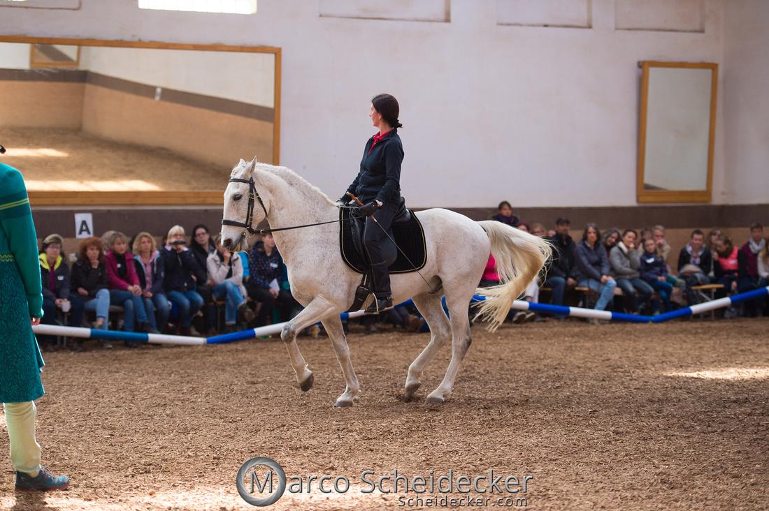"""C2018-04-29-0541  -  Ruth Giffels Morgenarbeit 2018 - Thema """"Sprache des Pferdes"""""""
