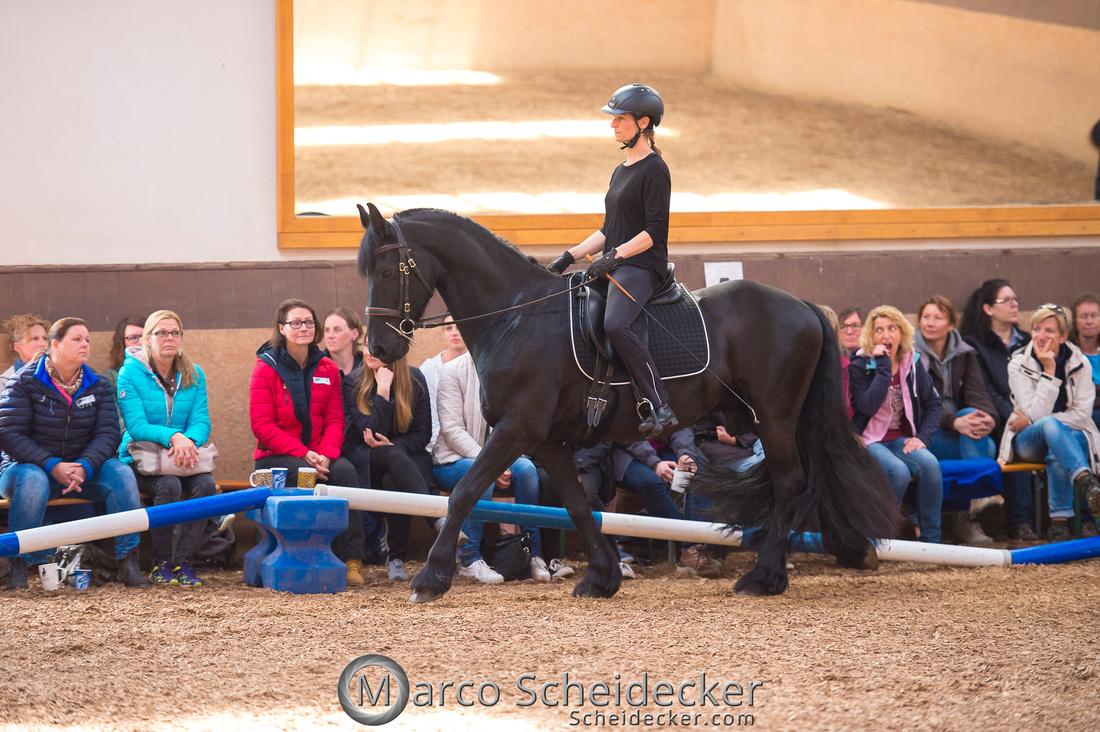 C2018-04-29-0564  -  Ruth Giffels Morgenarbeit 2018 - Thema - Sprache des Pferdes