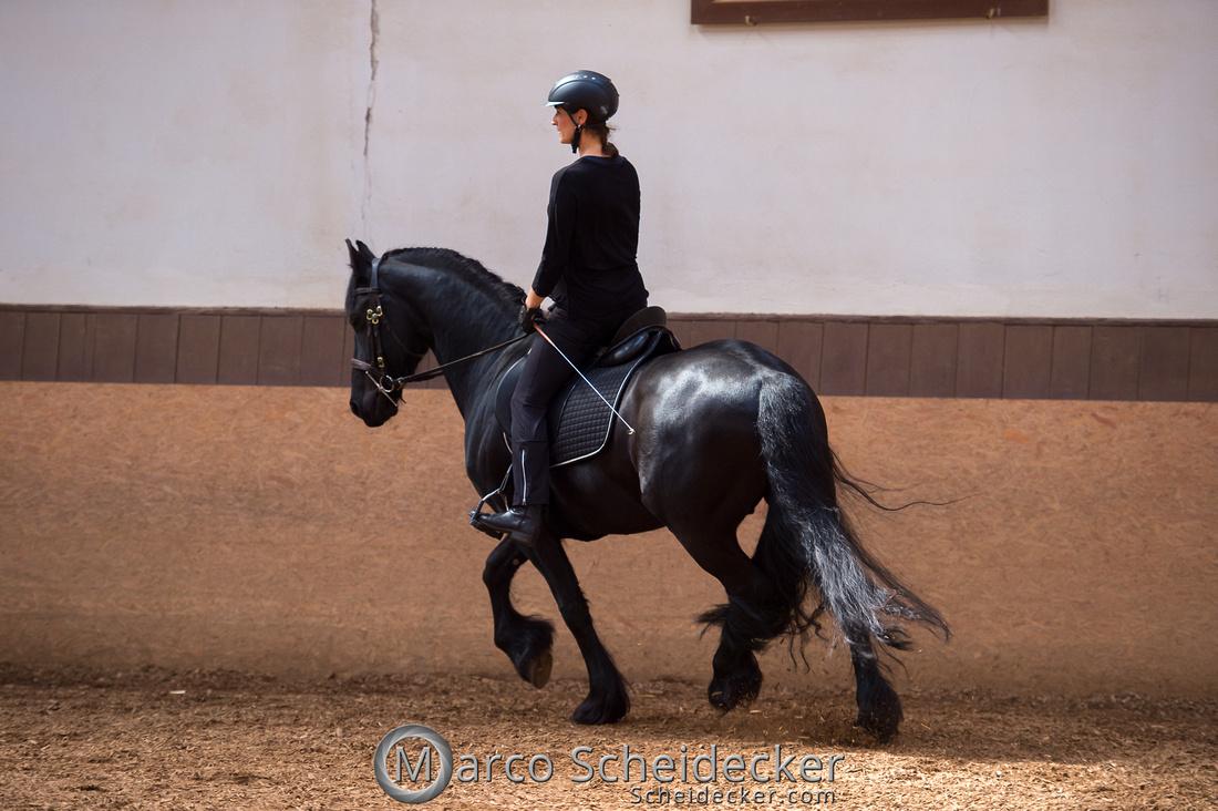 C2018-04-29-0581  -  Ruth Giffels Morgenarbeit 2018 - Thema - Sprache des Pferdes