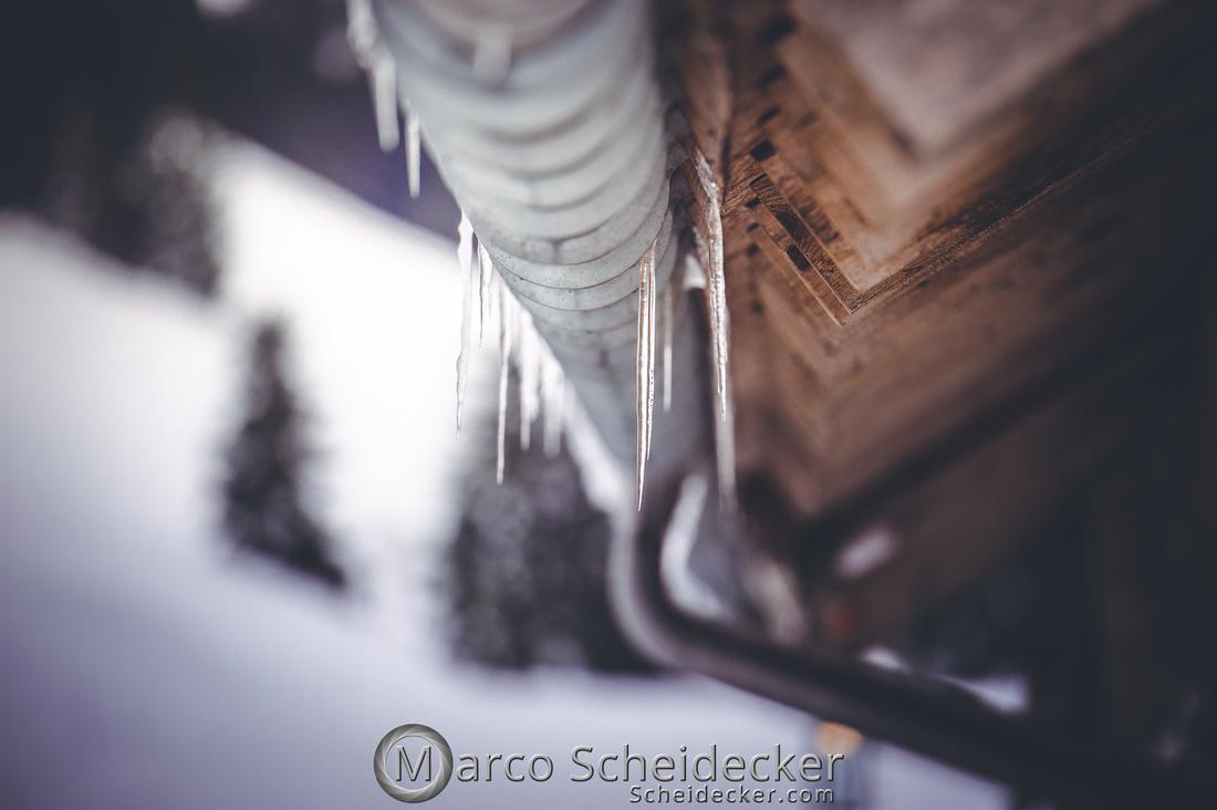 C2019-01-27-0305  -  Noriker im Schnee