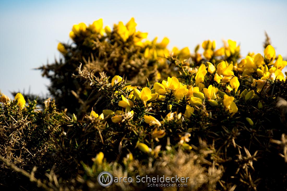 C2019-02-22-0028  -  Rhossili Bay - Wales