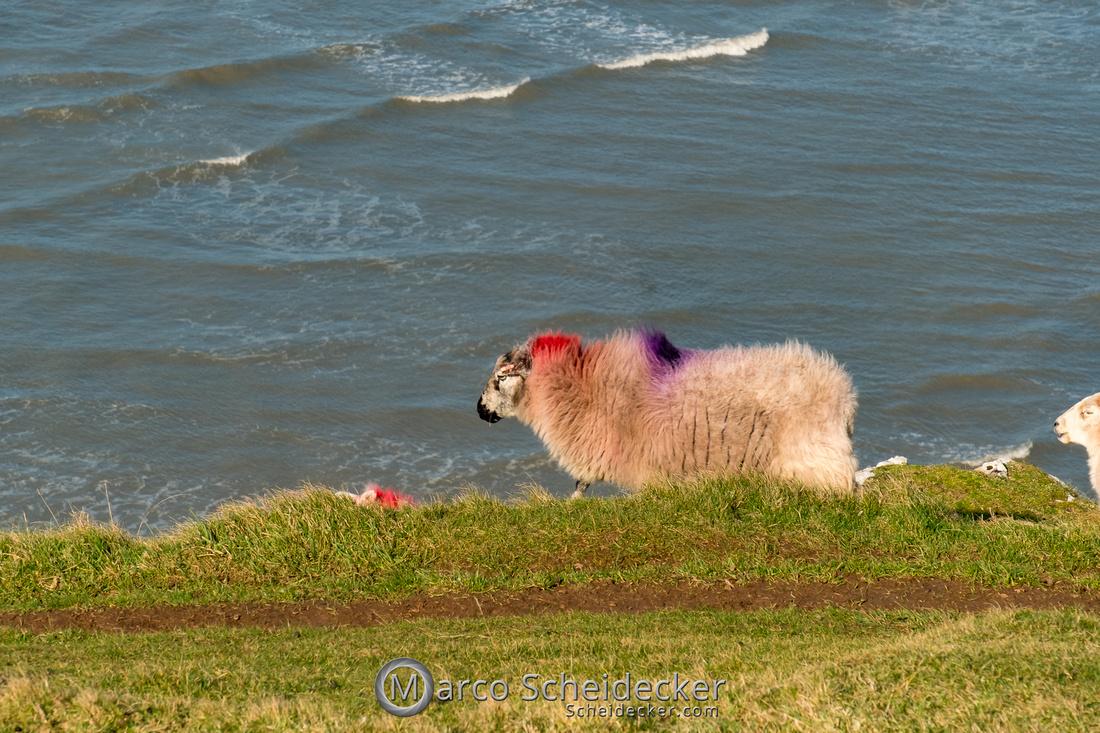 C2019-02-22-0035  -  Rhossili Bay - Wales